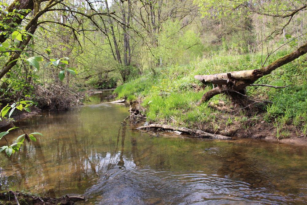 Flussufer bei der Eimersmühle